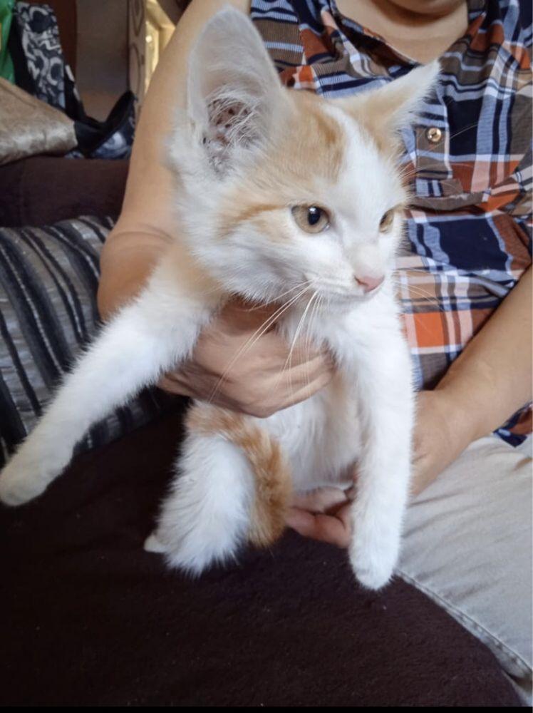котенок, котик в добрые руки
