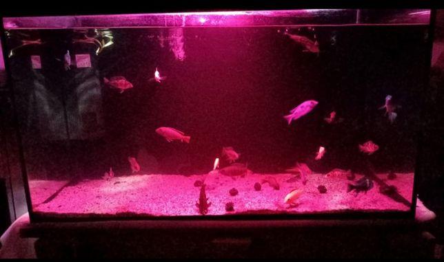 Продам аквариум 200л