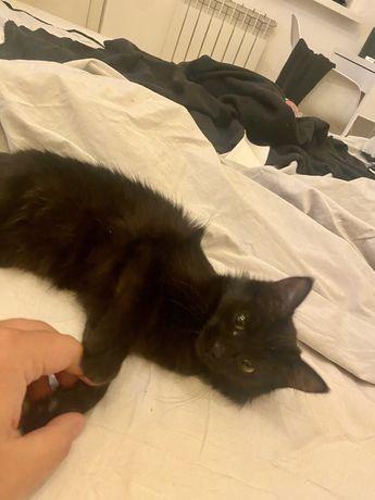 Коасивый котенок с бесплатной доставкой.