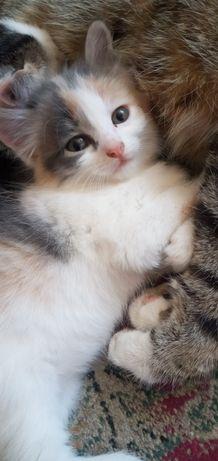 Котята 2 мальчик и девочка в Кокшетау