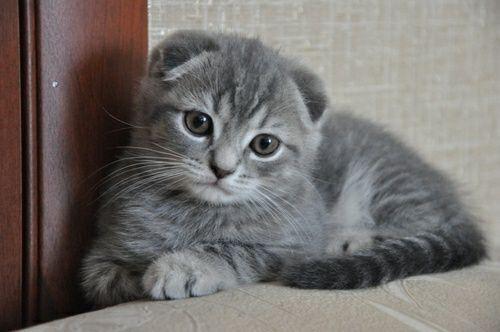 Продам котика мальчик