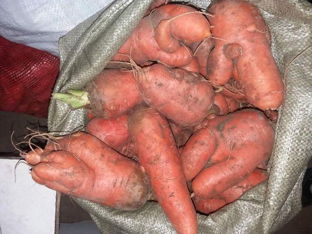 Продам морковь для поросят КРС МРС