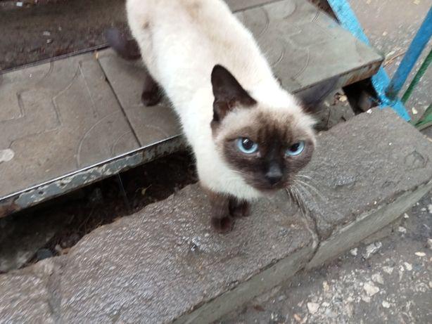 Нашли кота во дворе