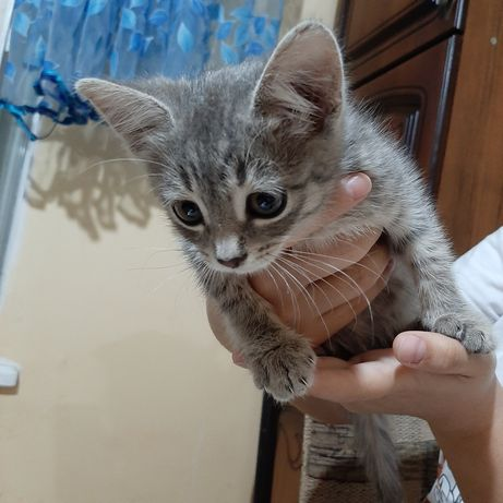 Отдам котенко срочно!