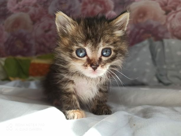 Котята малыши. Срочно.