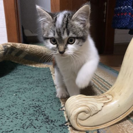Ищут дом и любящую семью котята