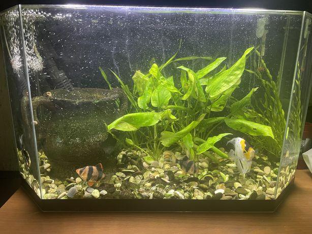 Продаю аквариум с рыбами