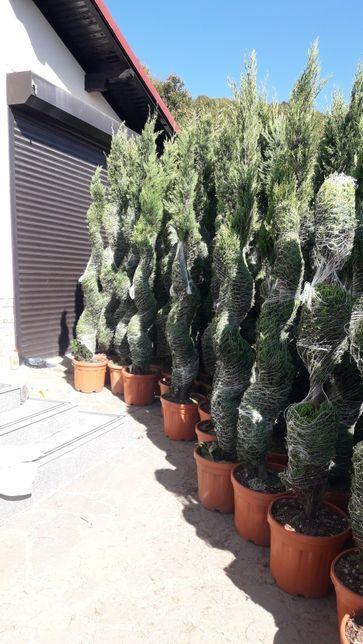 Plante ornamentale pentru gradina dumnevoastră