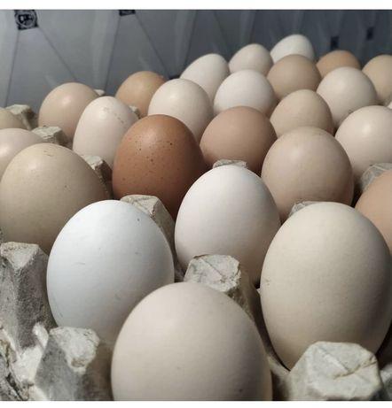 Яйца инкубационные.