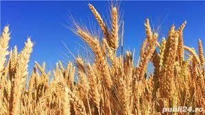 Dau in ARENDA/Chirie teren agricol extravilan COPACENI- langa TURDA