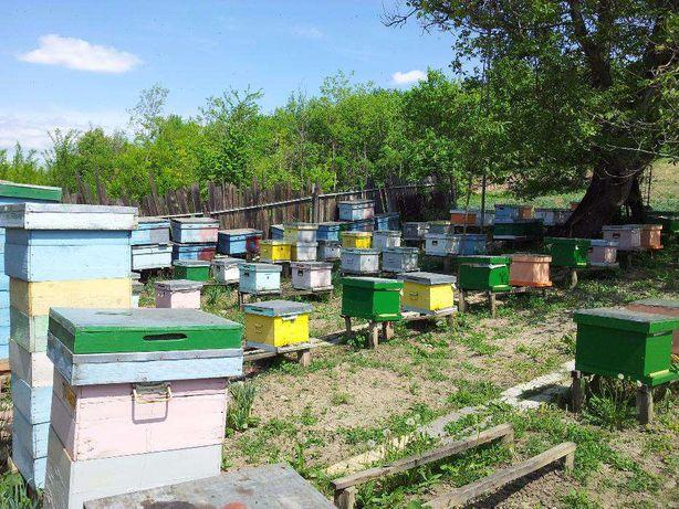 Vand stupi / familii de albine