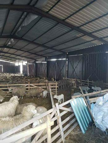 Vând saivane pentru animale
