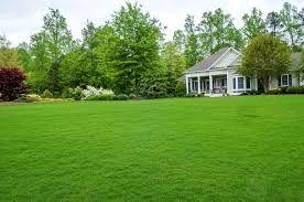 Семена газона, европейского качества
