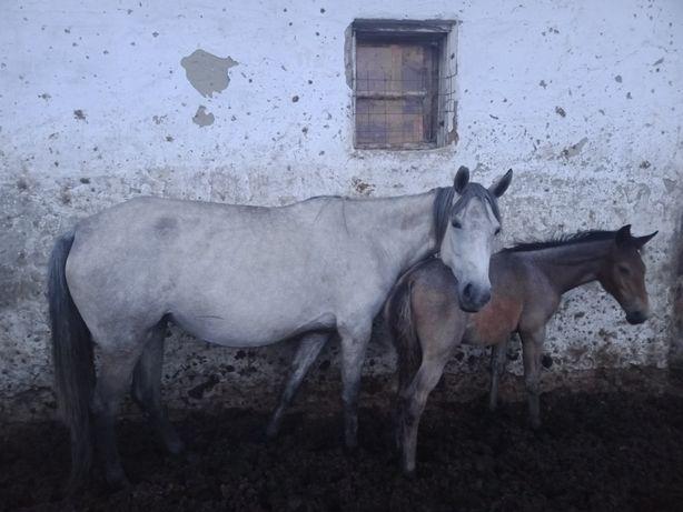 Продам лошадей цена договорная