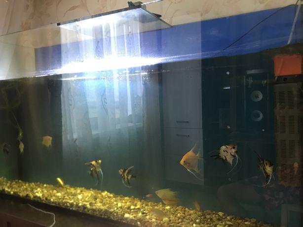 Продам аквариум и рыб