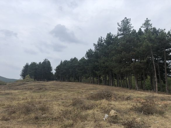 Продава земя 109 декара