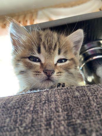 Отдам котеночка девочку в добрые руки