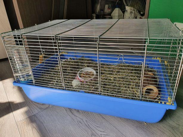 Vand cusca hamster + hamster