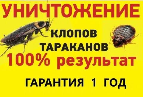 СЭС, Уничтожение Клопов, Тараканов, Блох, Мышей, Крыс, Дезинфекция