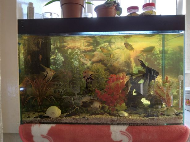 Продаю аквариум  80л