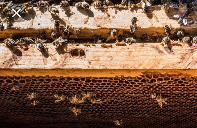 Мед урожай  2021 года