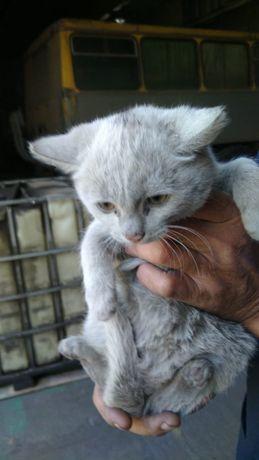 Дарю чумазиков котят