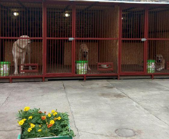 Гостиница - передержка для ВЗРОСЛЫХ собак, 3.000 тн в сутки