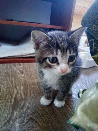 Милые Котята =0_0=