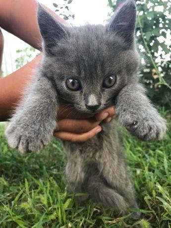 Отдам Прекрасных Котят в хорошие руки!