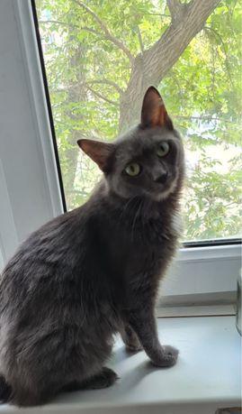 Кошечка Голубая русская длинношерстная ищет дом