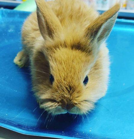 Продаются декларативные кролики
