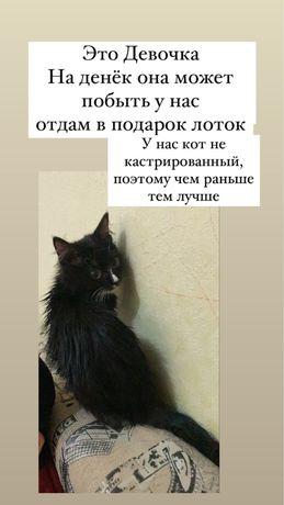 Отдам Котенка!!