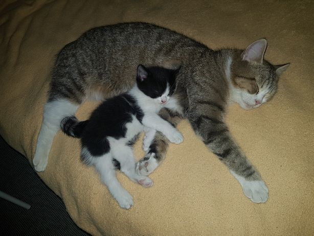 Отдам котёнка, возраст 1 месяц