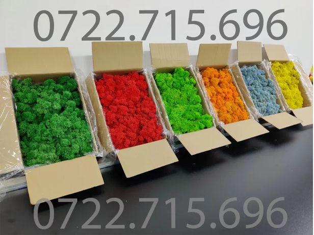 Licheni COLORATI pret de producator IMPORTATOR DIRECT calitatea 1