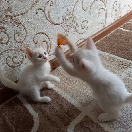 Котят в хорошие руки