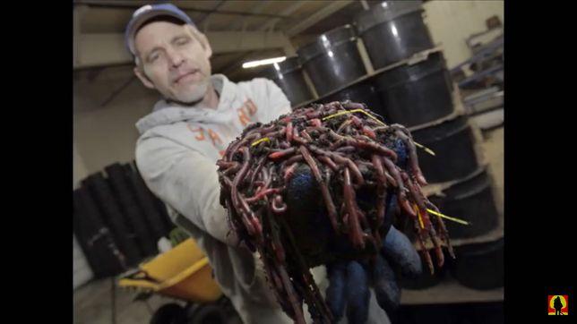 Калифорнийские черви продаю органическое удобрение БИОГУМУС