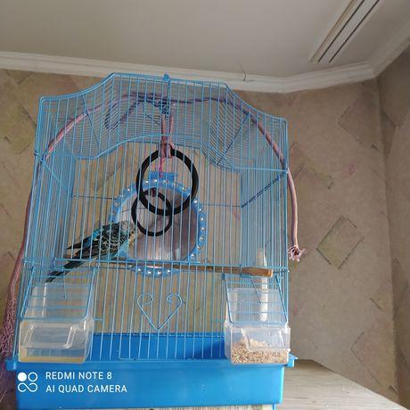 Продам попугая с клеткой