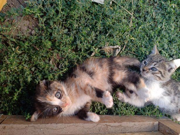 Дарую котят прямо в ваши руки :)