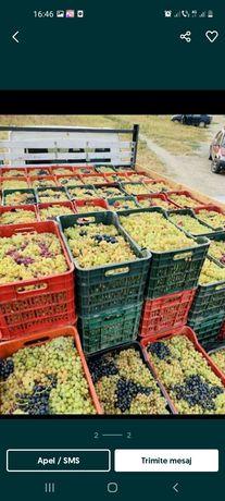 Struguri de vin transport gratuit în toată țara