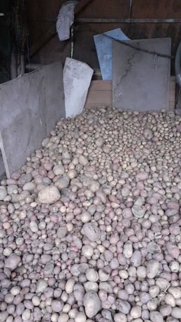 Vind cartofi pt animale