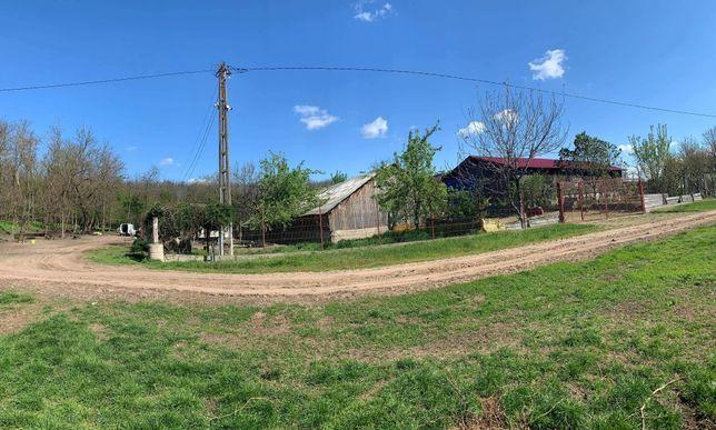 Ferma pentru vaci si oi