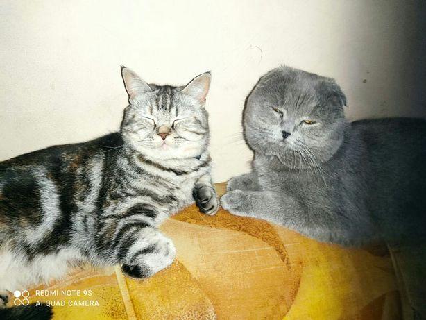 Милашки котята от элитных родителей
