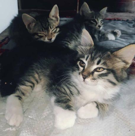 Кошки очень хорошие просто негде им жить а так оставил бы себе