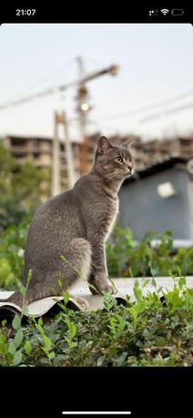 Пропал кот в районе ГУМа