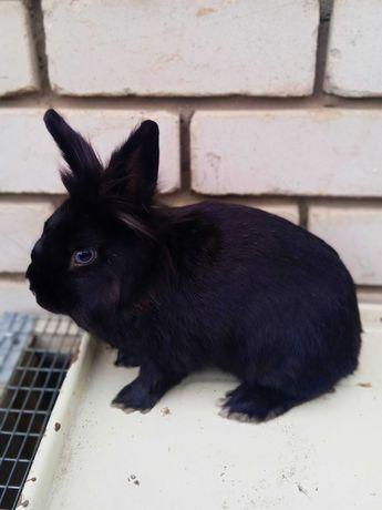 продам кролика декоративного