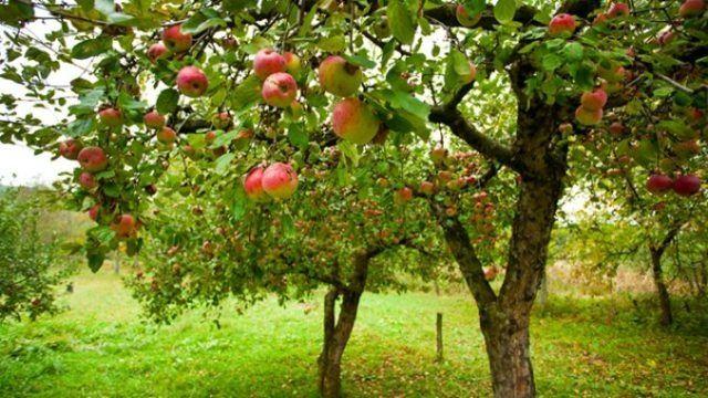 Livada cu pomi fructiferi pe Dealul Cetății
