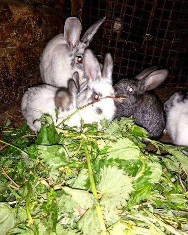 Продаются кролики.1000 ТГ.