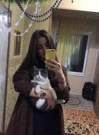 потерялся кот