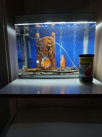 Продам аквариум с рыбками (дискусы)