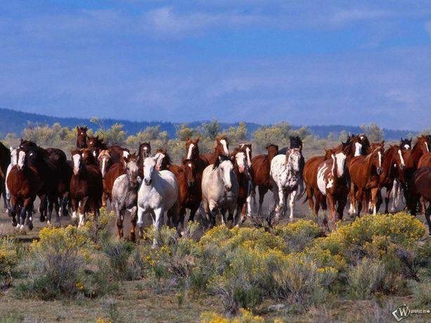 Продам жирных лошадей